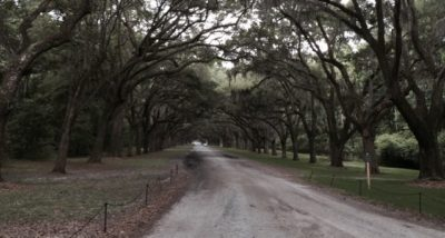 wormsloe-trees